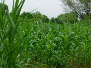 Gulugufe Malawi – Duurzame Zelfvoorziening